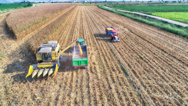 Aerial view of corn field during harvest Aerial view of corn field during harvest monoculture stock pictures, royalty-free photos & images
