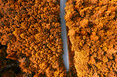 Aerial view of country road in the forest during foliage in fall
