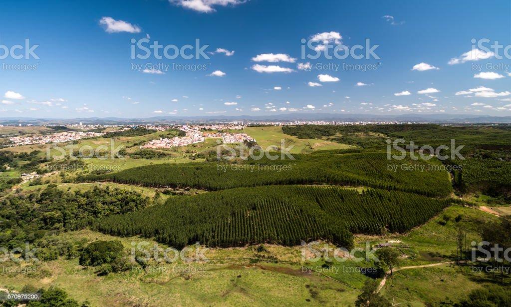 Vista aérea da zona rural de São Paulo e a floresta de eucalipto, Brasil - foto de acervo