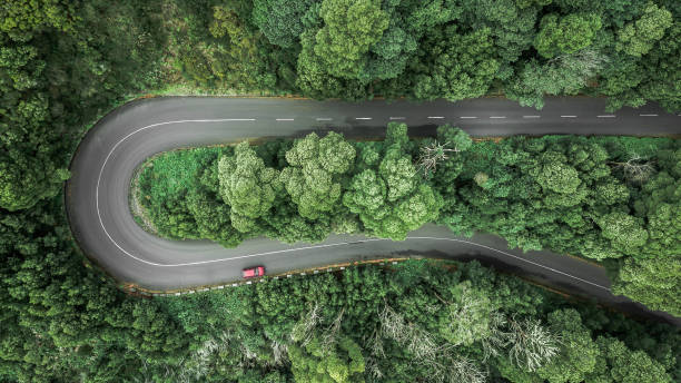 Aerial view of curve road with a car trough the dense woods on the high mountain stock photo