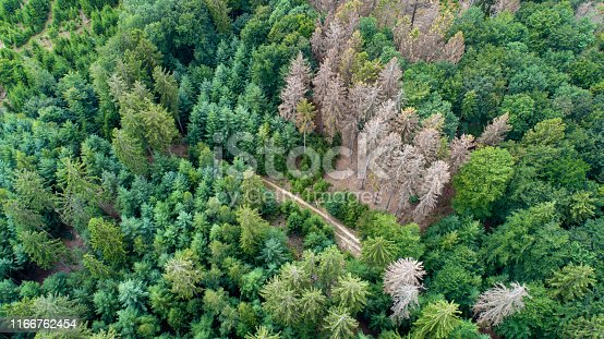 Aerial view of dead trees - forest dieback - Waldsterben, Germany