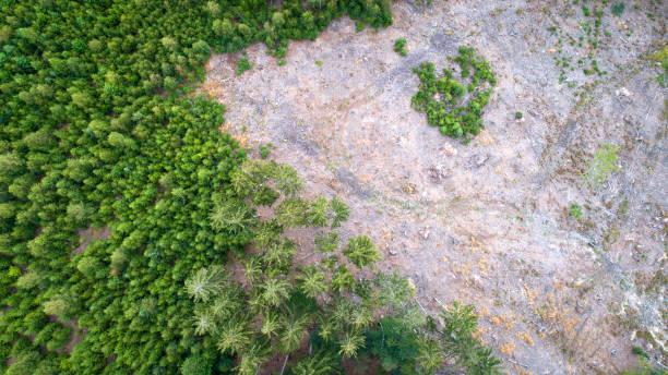 Luftaufnahme von abgestorbenen Bäumen - Waldsterben - Waldsterben – Foto