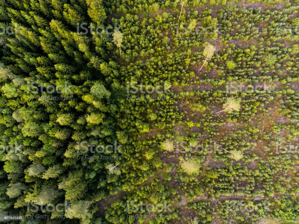 Aerial view of deforestation stock photo