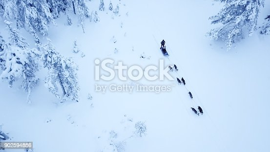 istock Aerial view of dogsledding in the arctic winter of Finnish Lapland. 902594886