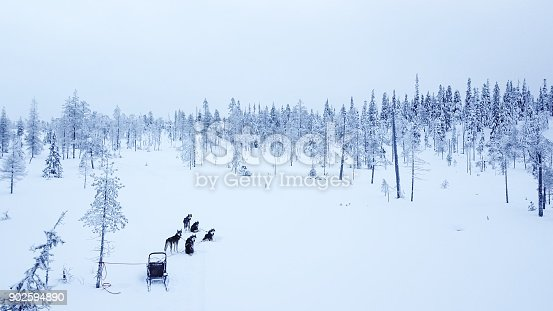 istock Aerial view of dogsledding in the arctic winter of Finnish Lapland. 902594890