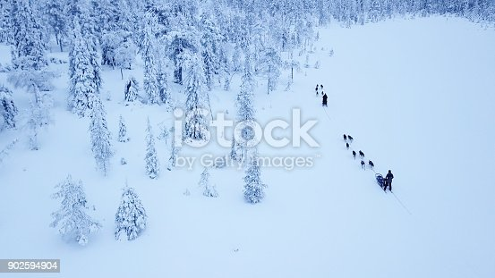 istock Aerial view of dogsledding in the arctic winter of Finnish Lapland. 902594904