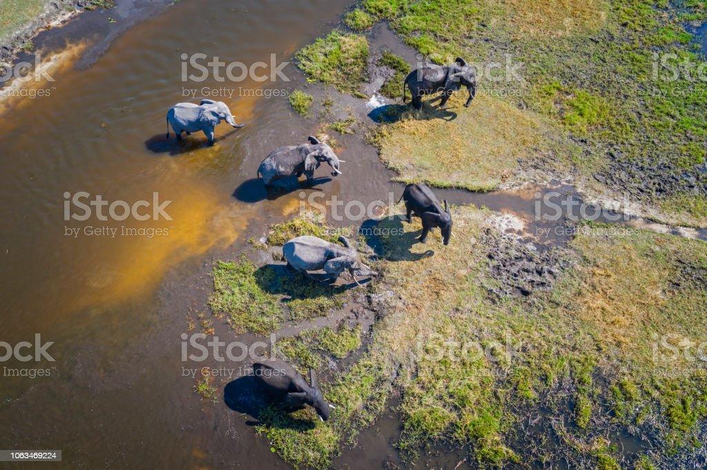 Luftaufnahme des Elefanten, Okavango Delta, Botswana, Afrika – Foto