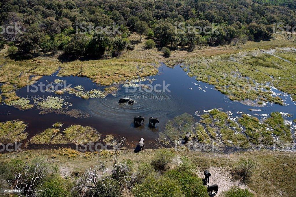 Aerial view of Elephants - Okavango Delta - Botswana stock photo