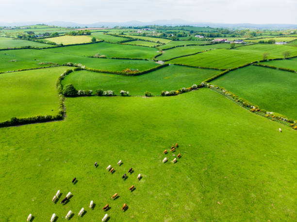 Aerial view of endless lush pastures and farmlands of Ireland. Beautiful Irish countryside with emerald green fields and meadows. stock photo