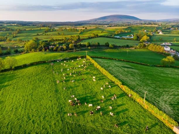 Luftaufnahme von endlosen üppigen Weiden und Ackerland von Irland. Schöne irische Landschaft mit grünen Feldern und Wiesen. Ländliche Landschaft bei Sonnenuntergang. – Foto