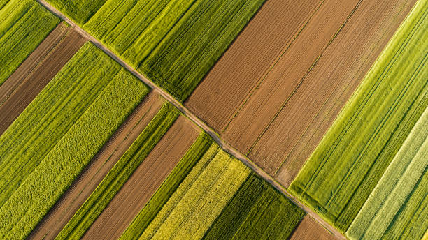 aerial view of fields - agriculture stock pictures, royalty-free photos & images