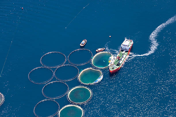 aerial view of fish farm - aquaculture stock pictures, royalty-free photos & images