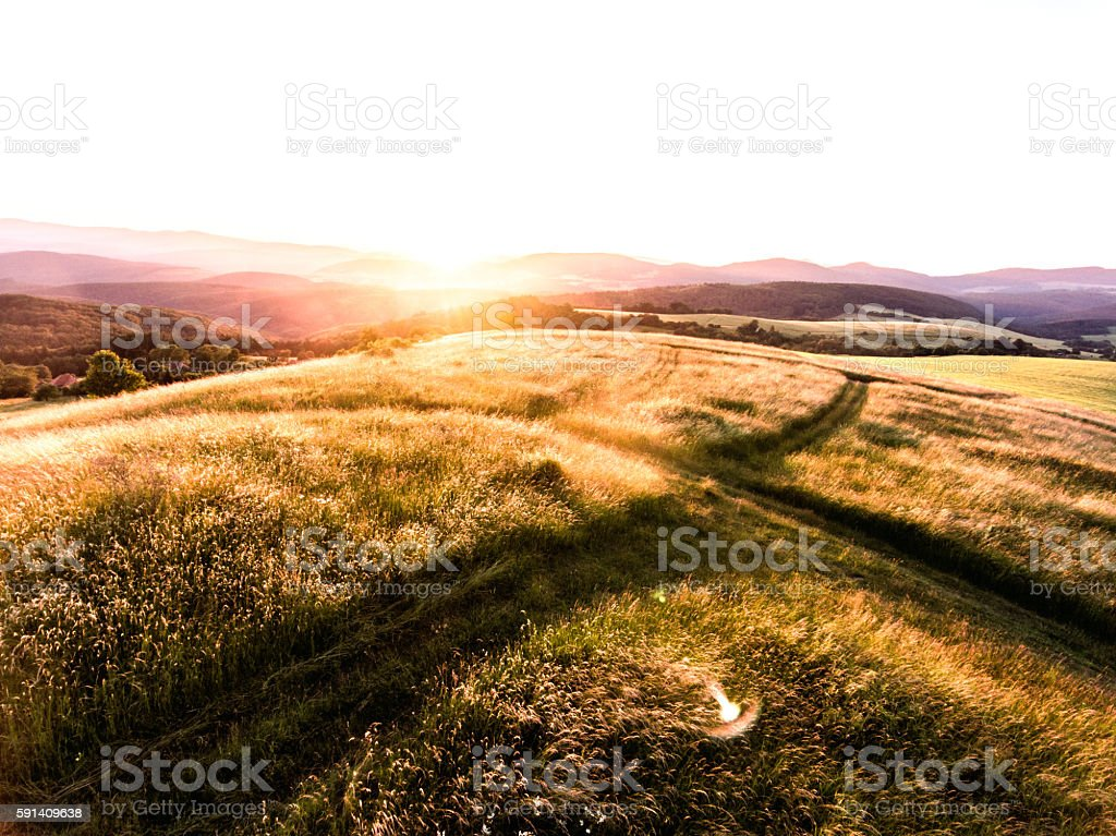 Aerial view of forest and green grassland at sunset. stock photo