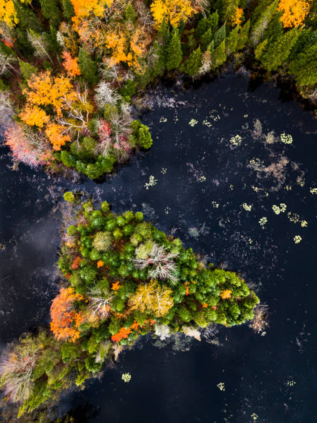 Aerial view of forest and lake in autumn stock photo