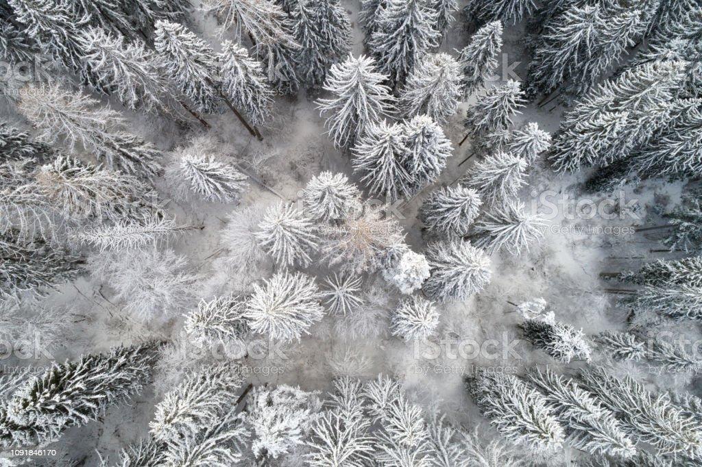 Luftaufnahme von Wald bedeckt mit Schnee – Foto