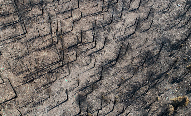 Aerial view of forest fire destruction Burnt trees and hillside after a Colorado forest fire.  Note: All drone photos were taken after the fire was out and the all clear given. deforestation stock pictures, royalty-free photos & images