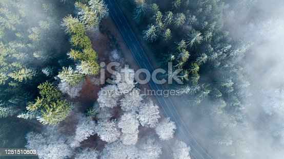 Aerial view of forest road and treetops on a foggy morning
