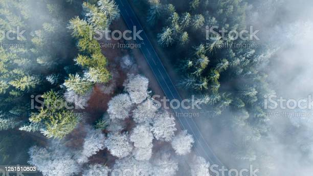 Photo of Aerial view of forest road and treetops on a foggy morning