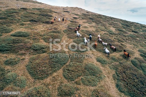 View from above of running horses at the edge of a mountain ridge at sunset, outdoors activities, chasing horses, horse flocking