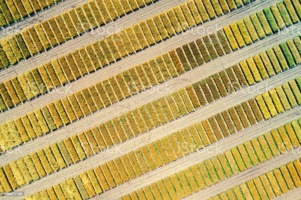 Luftaufnahme des geometrischen Weizenfelder. Abstrakter Natur Hintergrund – Foto