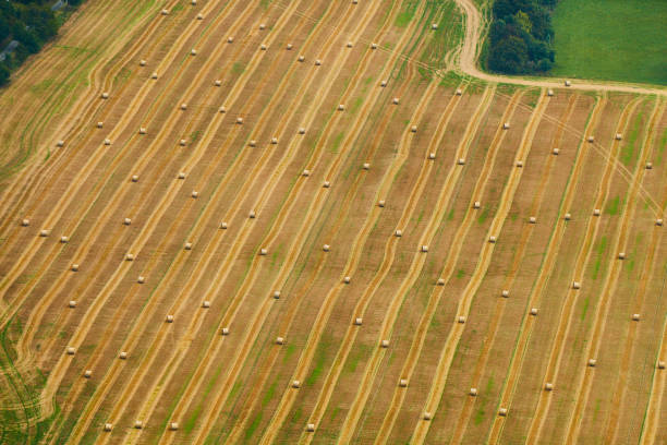Aerial view of golden field with hay bales surrounded by trees and green grass stock photo