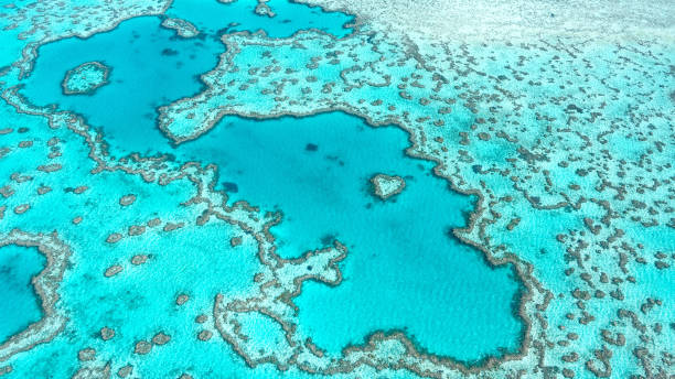 aerial view of great barrier reef in whitsunday's queensland australia, famous love heart reef. - unesco foto e immagini stock