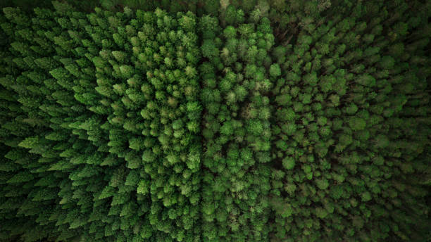 Aerial View of Green Forest and Country Landscape stock photo