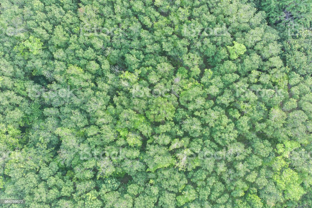 aerial view of green forest royalty-free stock photo