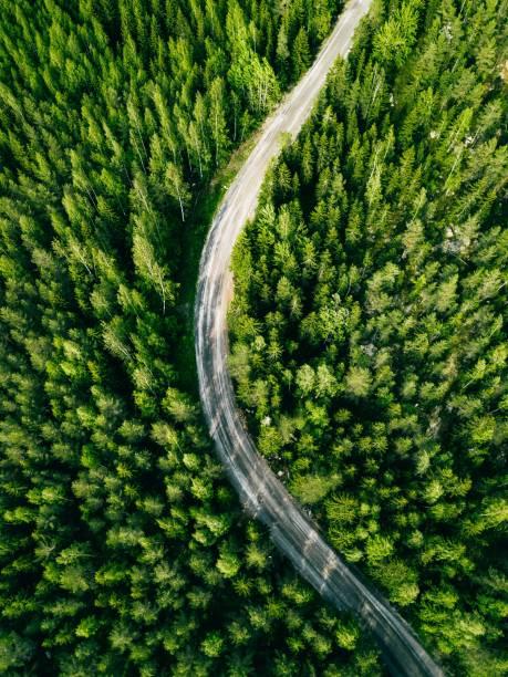 Luftaufnahme der grünen Forststraße. Gebogene Straße von oben. – Foto