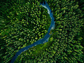 istock Aerial view of green grass forest with tall pine trees and blue bendy river flowing through the forest 1280157380