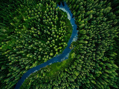 Aerial view of green grass forest with tall pine trees and blue bendy river flowing through the forest in Finland