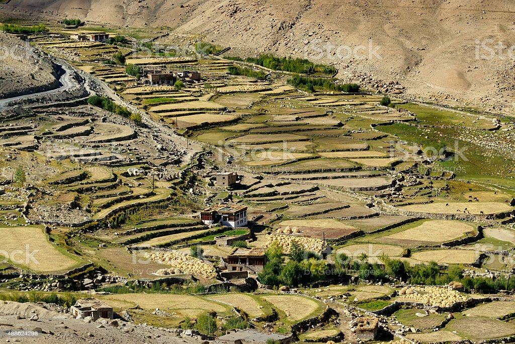 Vista aérea da paisagem cultural verde ladakh - foto de acervo
