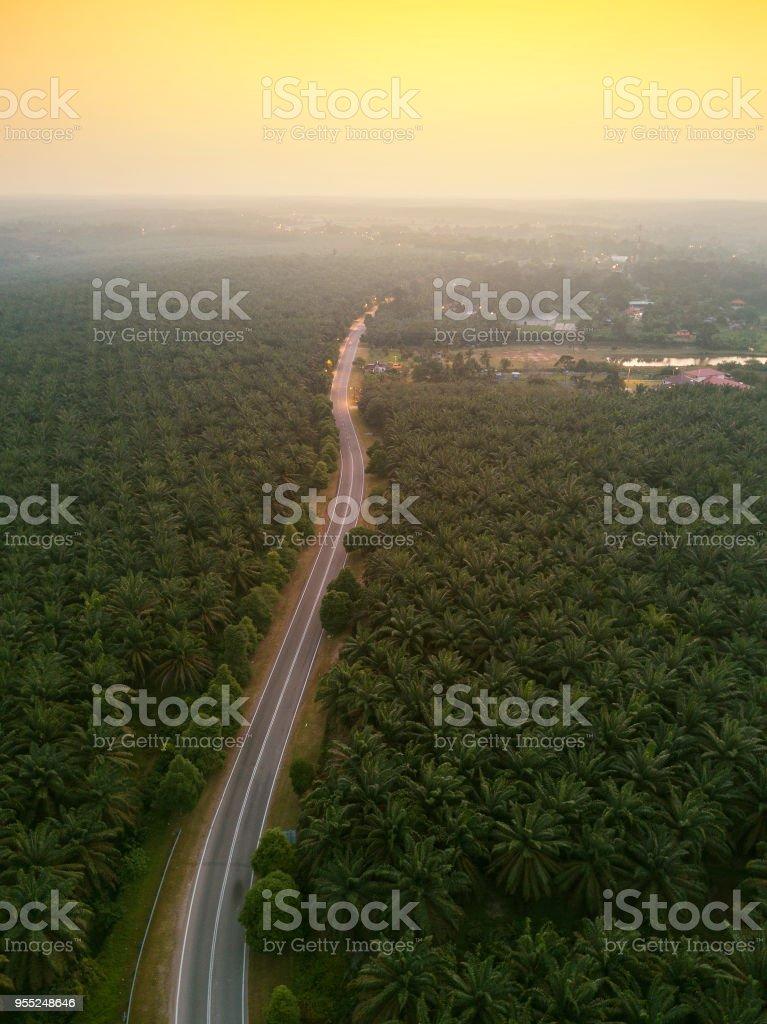 Luftaufnahme des grünen Palmenhain bei Sonnenaufgang. – Foto