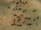 Aerial view of group of horses at evening. Herd of young horses running, top view.