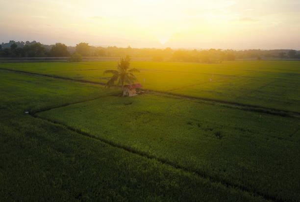 Luftaufnahme von einsamer kleiner Hütte und Kokosnussbaum in der Mitte des Reisfeldes mit dramatischem Sonnenaufgang. – Foto