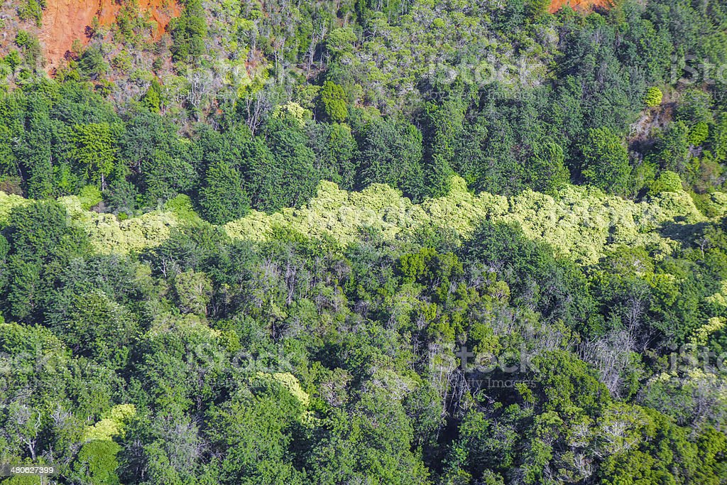 Aerial view of lush foliage in Hawaii royalty-free stock photo
