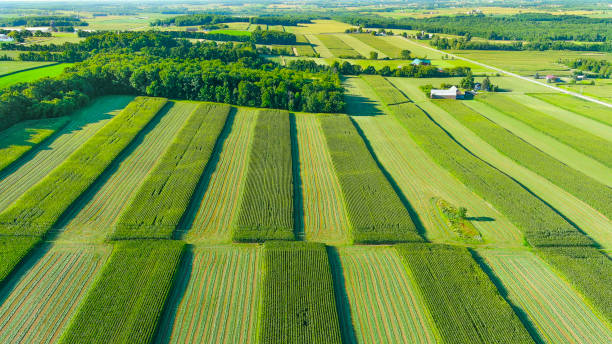Aerial view of lush green crops in farm fields stock photo