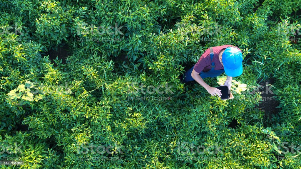 Aerial view of male farmer with digital tablet computer stock photo