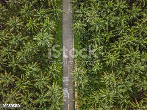 Drone point of view of man driving motorbike in palm trees road in the Philippines, aerial view from drone. People travel destinations nature adventure concept