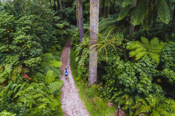 Aerial view of man running through wood. Healthy lifestyle man running in Rotorua, New Zealand. rotorua stock pictures, royalty-free photos & images