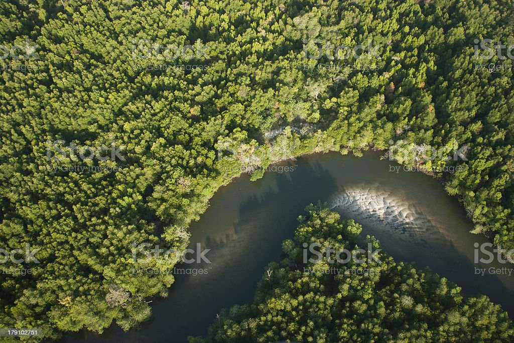 Aerial view of mangrove forest and river royalty-free stock photo