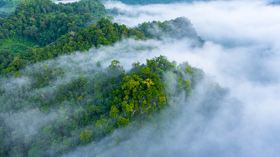 Aerial view of morning mist at tropical rainforest mountain, background of forest and mist, Aerial top view background forest.
