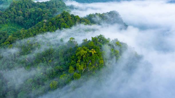 vista aerea della nebbia mattutina sulla montagna tropicale della foresta pluviale, sfondo di foresta e nebbia, foresta di sfondo vista dall'alto aereo. - fauna selvatica foto e immagini stock