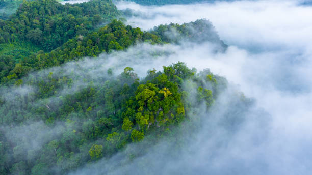 aerial view of morning mist at tropical rainforest mountain, background of forest and mist, aerial top view background forest. - jungle стоковые фото и изображения