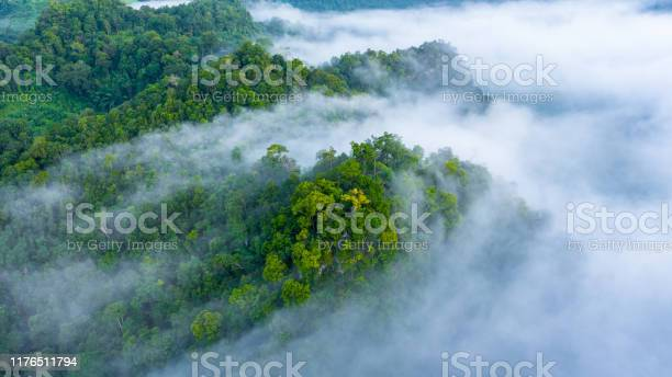 Photo of Aerial view of morning mist at tropical rainforest mountain, background of forest and mist, Aerial top view background forest.