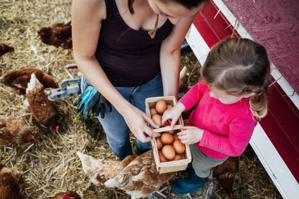 Luftaufnahme von Mutter und Tochter beim Eiersammeln – Foto
