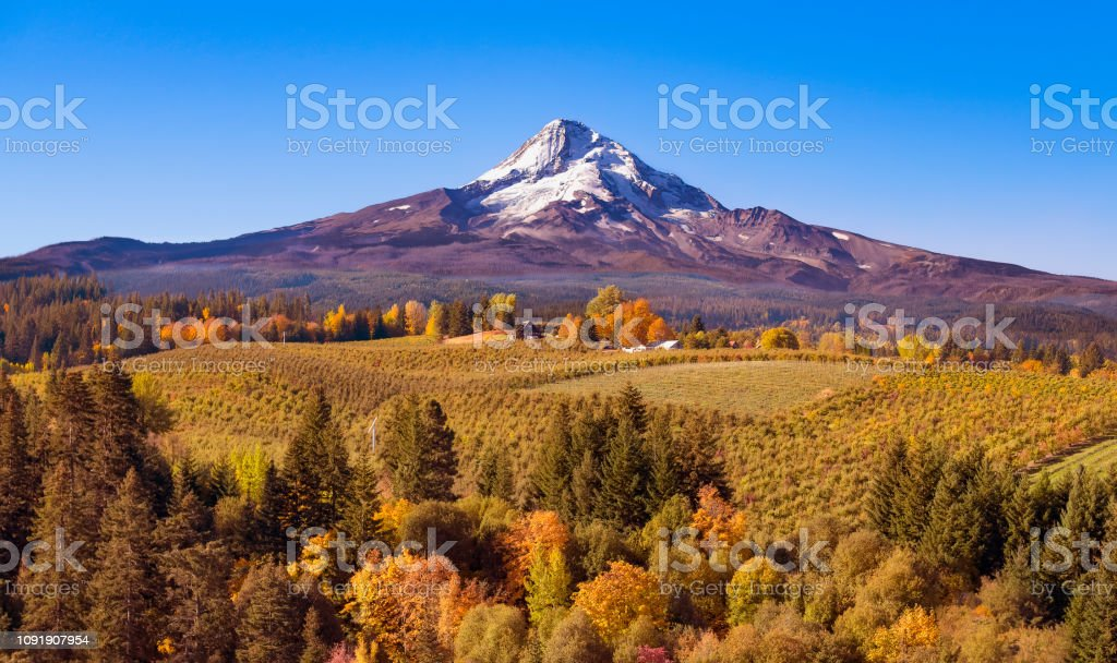 Aerial view of Mt Hood with a fruit orchard in the foreground on an autumn day just after sunrise looking south towards the mountain stock photo