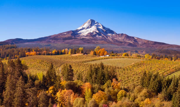 Aerial view of Mt Hood with a fruit orchard in the foreground on an autumn day just after sunrise looking south towards the mountain Aerial view of Mt Hood with a fruit orchard in the foreground on an autumn day just after sunrise looking south towards the mountain mt hood stock pictures, royalty-free photos & images