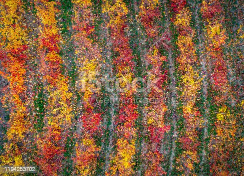 aerial view of multicolored vineyards in autumn at sunset, Catalonia, Spain
