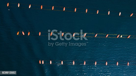 istock aerial view of mussels farm, Adriatic sea 828913552